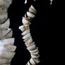 escultura. Un proyecto de Cerámica de Clara Graziolino - 26.05.2020