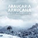 Araucaria Araucana - sound postproduction & music. A Post-production, Sound Design, Post-production, and Music Production project by Rafael Bernabeu García - 03.01.2017
