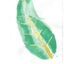 Mi Proyecto del curso: Ilustración botánica con acuarela. Un proyecto de Cine, vídeo, televisión, Bellas Artes, Cocina, Cómic e Ilustración botánica de Gonzalo Ceceña - 05.08.2020