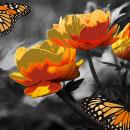 Flying flower art ... . Un proyecto de Fotografía, Arquitectura, Diseño gráfico, Pintura, Retoque fotográfico, Creatividad, Iluminación fotográfica, Dibujo artístico, Fotografía digital, Fotografía artística, Fotografía en exteriores, Fotografía para Instagram, Composición fotográfica, Dibujo digital y Fotomontaje de David Fernando Rico Ramirez - 20.08.2020