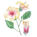 Mi Proyecto del curso: Ilustración botánica con acuarela. Un proyecto de Ilustración botánica de Ana Pérez - 20.08.2020