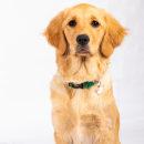 Mi Proyecto del curso: Introducción a la fotografía de perros. Un projet de Photographie de Miguel Lemus - 22.09.2020