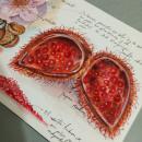 Mi Proyecto del curso: Cuaderno botánico en acuarela. Um projeto de Ilustração, Pintura em aquarela, Ilustração botânica e Sketchbook de Úrsula Ochoa Gallo - 31.07.2020