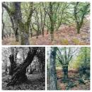 "Serie collages de otoño ""De castaño... castaña"". Um projeto de Retoque fotográfico de Neri Campaña Ramos - 20.10.2020"