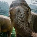 Elefantes en Tailandia . Un proyecto de Fotografía documental de Lorena Caso - 08.12.2020