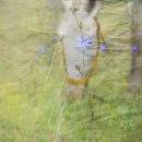 Mi Proyecto del curso: Postproducción fotográfica para la imaginación. Un proyecto de Fotografía, Fotografía digital, Fotografía artística y Composición fotográfica de Lorena Wanda Gende - 30.12.2020