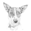 Retrato de mascotas. Un proyecto de Ilustración, Ilustración de retrato y Dibujo de Retrato de Samantha Barbachano - 08.01.2021