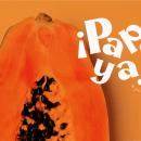 Papaya - Type Design. A 3D project by Ana Crispi - 05.24.2020