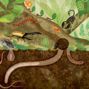 Animal Measure Up. Um projeto de Ilustração, Ilustração infantil e Ilustração editorial de Romina Martí - 11.10.2018