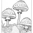 ilustracion botanica 2. Um projeto de Ilustração botânica e Ilustração com tinta de Lucia Lara - 17.02.2021