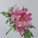 Mi Proyecto del curso: Ilustración botánica con acuarela. Um projeto de Pintura em aquarela de Marie de Smet - 20.02.2021