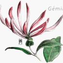 GÉMINIS - Madre Selva . Um projeto de Ilustração, Ilustração digital, Pintura em aquarela e Ilustração editorial de Vanessa Alvarez Vaello - 24.02.2021