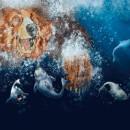 """Soy un oso"" Cuento infantil en técnica mixta. Um projeto de Ilustração infantil de Elena de Yarza - 01.04.2016"