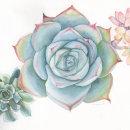 Energía Botánica. Un proyecto de Ilustración, Ilustración botánica e Ilustración naturalista de Katherin Valencia Rosero - 19.03.2021