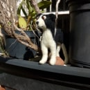Pepper, the Border Collie. Needle Felting.. A Character Design, Crafts, To, Design, Character animation, Art To, and s project by Edson Mito - 04.01.2021