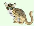 Mi Proyecto del curso: Ilustración naturalista de animales con Procreate. Um projeto de Ilustração digital e Ilustração naturalista de Andrea Tello - 08.05.2021