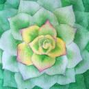 Suculenta con acuarela en negativo. Um projeto de Ilustração, Pintura em aquarela e Ilustração botânica de Cecilia Rodríguez Barreiro - 17.05.2021