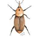 Naturalista. Un proyecto de Ilustración de Kalli Horn Mjaczak - 22.05.2021