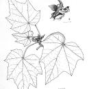 Ilustración botánica. Un proyecto de Ilustración de Cristina Rodríguez Sosa - 03.06.2021