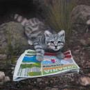 El gato andino desalojado. Um projeto de Pintura de Laura Cuadros - 03.06.2021