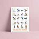 Guía de aves de Rivas Vaciamadrid. Um projeto de Ilustração e Design gráfico de eluguina - 11.06.2021