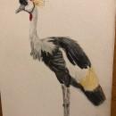 Mi Proyecto del curso: Ilustración naturalista de aves con acuarela. Um projeto de Ilustração, Pintura em aquarela, Desenho realista e Ilustração naturalista de Desirée Serna - 11.06.2021