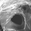 Mi Proyecto del curso: Autorretrato fotográfico artístico- AXFISIA. Un progetto di Fotografia, Fotografia di ritratto, Fotografia artistica, Autoritratto fotografico , e Fotografia di interiori di victoria2013 - 28.06.2021