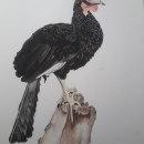 Mi Proyecto del curso: Ilustración naturalista de aves con acuarela. Um projeto de Ilustração, Pintura em aquarela, Desenho realista e Ilustração naturalista de Monica Jazmin Guardamino Salvador - 23.07.2021
