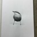 Project Watercolor Illustrating Birds course from Sarah Stokes. Un progetto di Illustrazione, Pittura ad acquerello, Disegno realistico e Illustrazione naturalista di Barbara - 27.07.2021