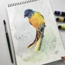 My project in Artistic Watercolor Techniques for Illustrating Birds course. Um projeto de Ilustração, Pintura em aquarela, Desenho realista e Ilustração naturalista de Manish P M - 11.09.2021