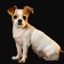 Mi Proyecto del curso: Introducción a la fotografía de perros. Un proyecto de Fotografía, Fotografía de retrato, Fotografía de estudio, Fotografía documental, Fotografía Lifest, le y Fotografía en interiores de JJ Morales - 13.09.2021