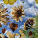 Arreglo Floral para casa. Um projeto de Design floral e vegetal de Diana Romeo - 20.09.2021