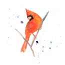 Mi Proyecto del curso: Acuarela artística para ilustración de aves: Cardenal. Um projeto de Ilustração, Pintura em aquarela, Desenho realista e Ilustração naturalista de Cecilia Rodríguez Barreiro - 18.08.2021