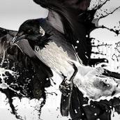 Cuervo líquido. A Design und Illustration project by Alex Heuchert - 08.10.2010
