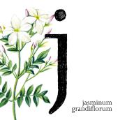 36 days of typography. Un proyecto de Ilustración y Tipografía de base12 - 13.04.2016