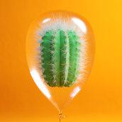 Cactus. Un proyecto de Diseño, 3D, Dirección de arte y Diseño gráfico de Blas Oliet López - 17.05.2016