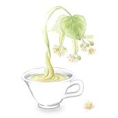 Exposición: plantas para beber. A Illustration project by Thaïs Borri Bas - 04.18.2017