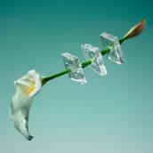 Freezing Flowers . Um projeto de Fotografia e Direção de arte de Paloma Rincón - 17.07.2017