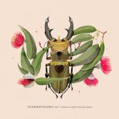 Coleoptera. Un proyecto de Ilustración de Natalia Escaño - 17.09.2017
