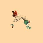 Insectos - Collage. Um projeto de Ilustração de Coral Medrano - 26.10.2017