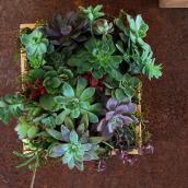 Mi Proyecto del curso: Diseño y creación de composiciones botánicas. Un projet de Design , Pa , et sagisme de Compañía Botánica - 03.10.2018
