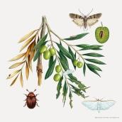 Plagas de agricultura El Olivo. Un progetto di Illustrazione di José Emilio Toro Pareja - 07.10.2018