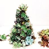 Arbol de Navidad lleno de suculentas!. Un projet de Design , Pa , et sagisme de Compañía Botánica - 19.12.2018