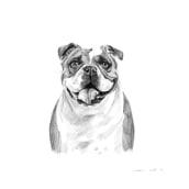 Digital Pet Portraits with Procreate [B&W]. Un proyecto de Ilustración, Bellas Artes, Dibujo, Ilustración digital, Ilustración de retrato, Dibujo de Retrato, Dibujo realista y Dibujo artístico de Victoria Nell - 03.12.2019
