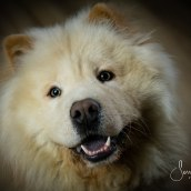 Mi Proyecto del curso: Introducción a la fotografía de perros. Um projeto de Fotografia de estúdio de Serrana Rabosto Elizaga - 05.01.2020