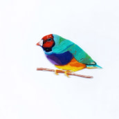 Gouldian Finches Bird made with colourful clay. Técnica aprendida en el curso de Jacinta Besa G.. A Crafts project by Andrea Martinez - 01.08.2020