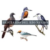 Bestiario del Río Negro. Un proyecto de Ilustración, Bellas Artes, Pintura a la acuarela y Dibujo artístico de Juan Camilo - 17.10.2019
