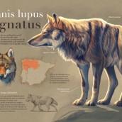 Mi Proyecto del curso: Ilustración naturalista de animales con Procreate. Um projeto de Infografia e Ilustração digital de Román García Mora - 16.03.2020