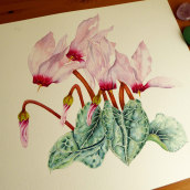 Ciclamen en acuarela. A Fine Art, Painting, Watercolor Painting, and Artistic drawing project by Myriam - 03.23.2020
