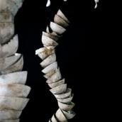 escultura. Un projet de Céramique de Clara Graziolino - 26.05.2020